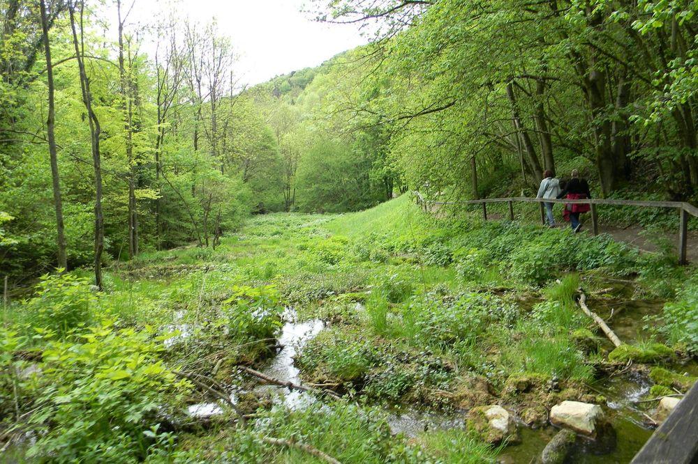 Zwei Menschen, die auf einem Wanderweg im Wald laufen.